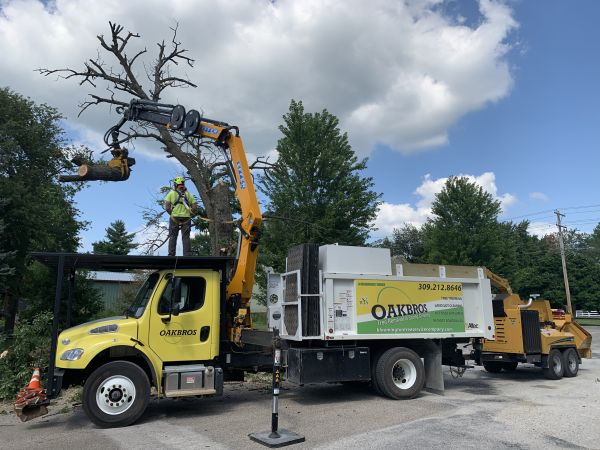 remote controlled tree removal company